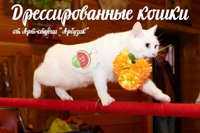 дрессированные кошки в Киеве